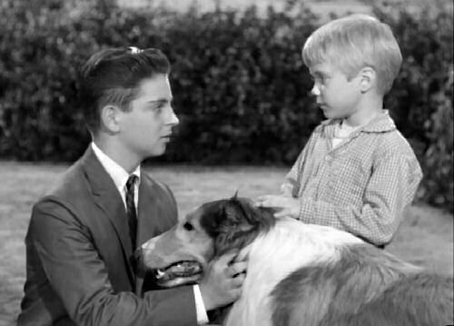 In the fourth season, after the Millers acted as a foster family for a seven-year-old named Timmy for the summer, Gramps passed away. Ellen needed to be in the city where she could give music lessons and Jeff could attend high school. Knowing the city was no place for a big dog who was used to running free, Jeff left Lassie with Timmy. Courtesy of lassieweb.org